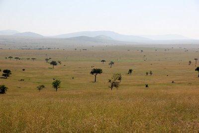 Serengeti_2.jpg