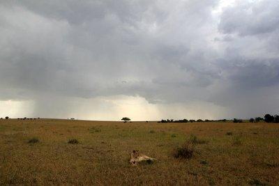 Serengeti_5.jpg