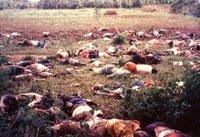 Genocide_victims.jpg
