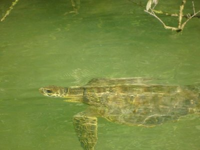 """turtles in turtle cove"""