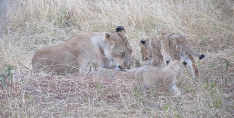 large_02292012_6.._Masai_Mara.png