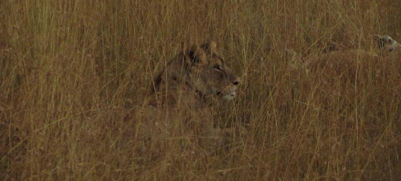 large_03012012_7.._Masai_Mara.png