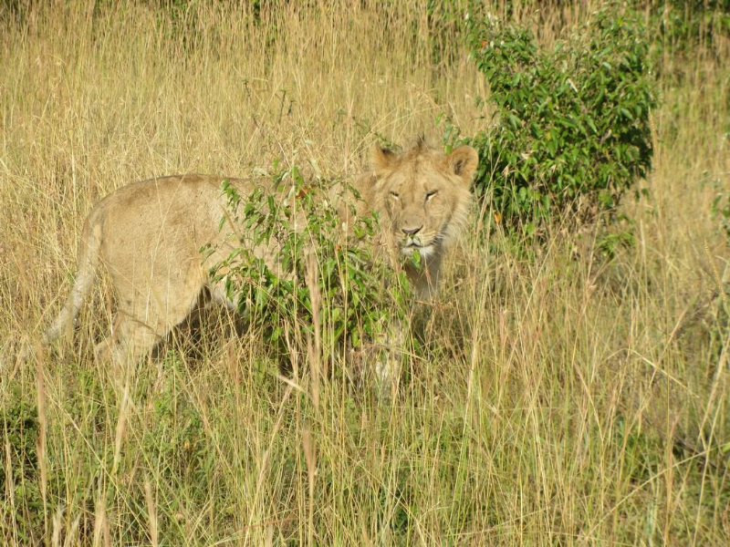 large_03022012_2.._Masai_Mara.png