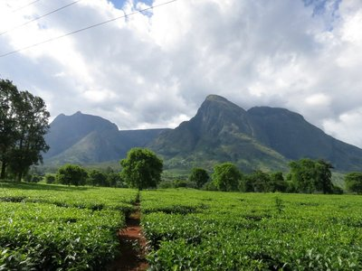 Mulanje Mountain and tea plantations