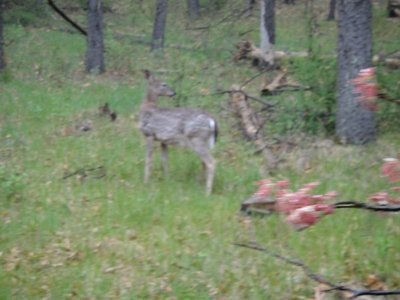 Wildlife along the trails