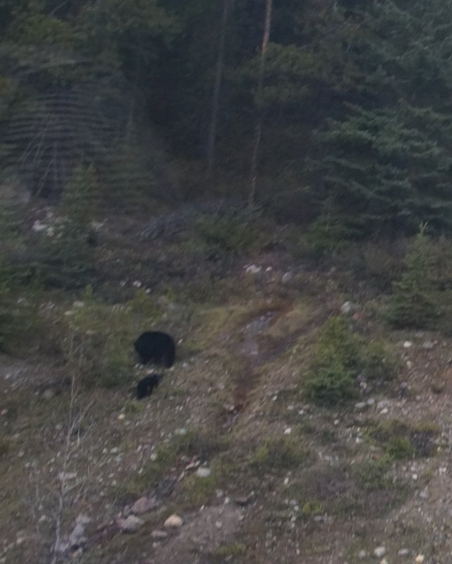 Another photo of some bears