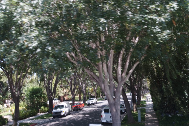 Beverley Hills - each street has different types of trees
