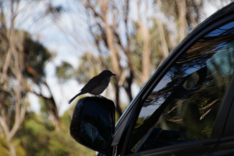 Bird pecking our mirror at The Neck