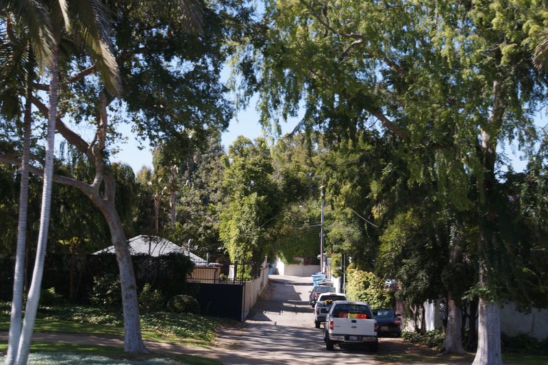 Beverly Hills-streets have different types of trees from each other and thre are lane ways behind houses for garbage trucks and service vehicles to access.