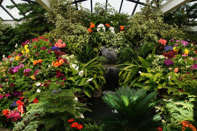 Hot house flowers -The Butchart Garden