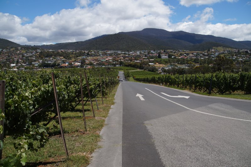 Road into MONA also Moorilla Vineyards