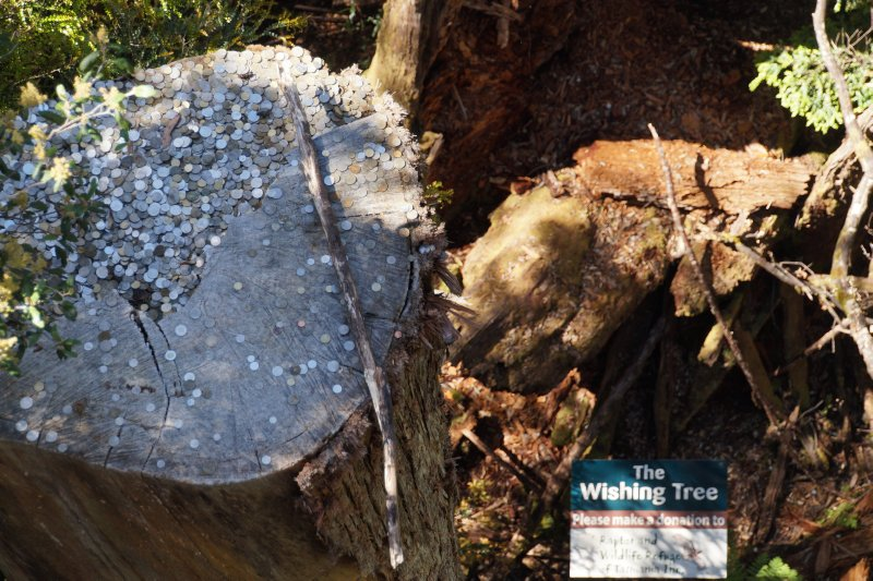 The Wishing Tree on The Tahune Forest Air Walk