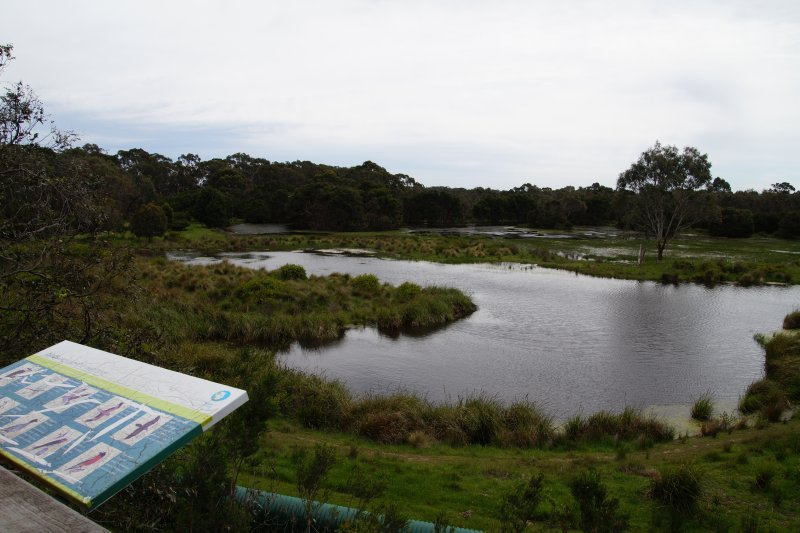 Wetlands at the Australian Koala Conservation Centre