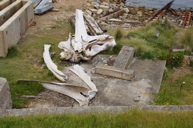 Whale bones on Maria Island