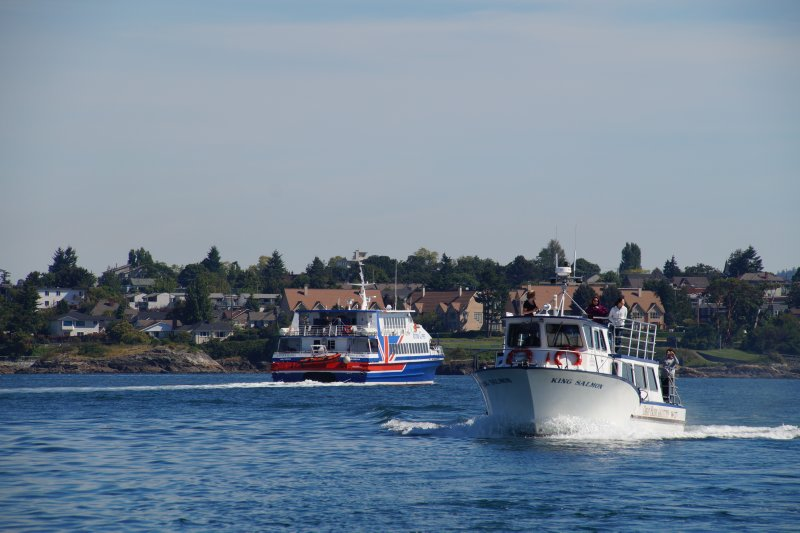 Whale watching boats