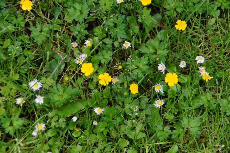 Wildflowers, Stanley Park