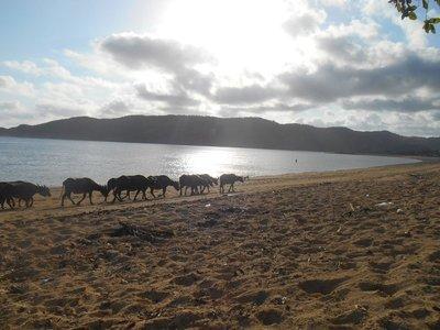Wildlife in the beach