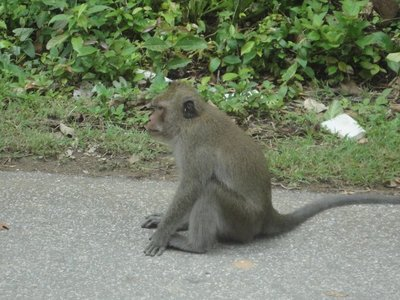 We saw monkeys <img class='img' src='http://www.travellerspoint.com/Emoticons/icon_smile.gif' width='15' height='15' alt=':)' title='' />