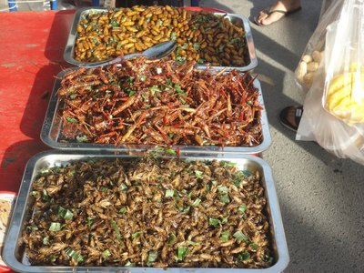Insects to eat, not really our thing