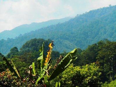 Ketambe, rain forest
