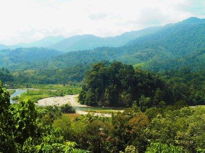 Ketambe, rainforest
