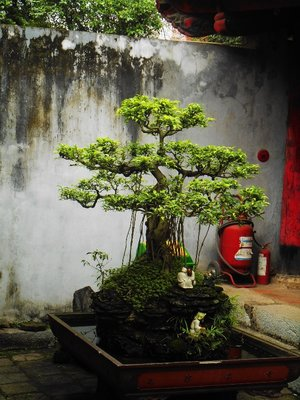 Vietnamese bonsai