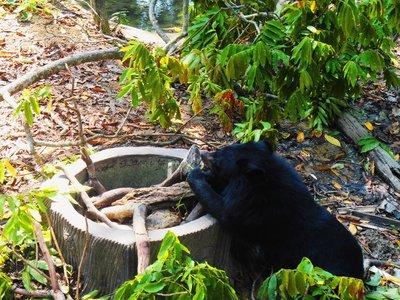 Bear sanctuary, Luamprabang