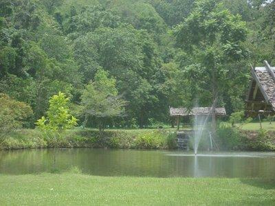 Garden and Carp Pond