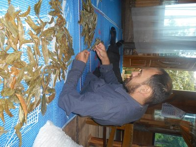 Sorting up leaves