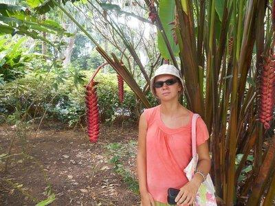Forrest walk in Singapore