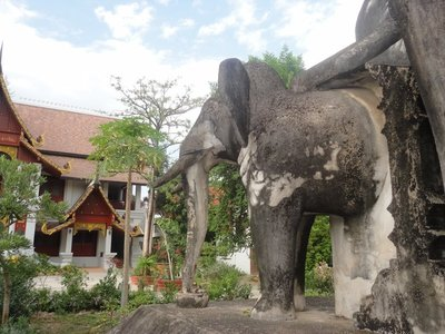 Elephant seem to be the animal of the region
