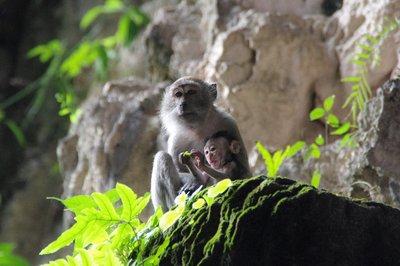 Batu Caves à Kuala Lumpur