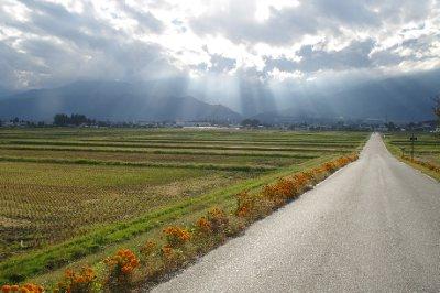 Sur le chemin vers la ferme de Wasabi