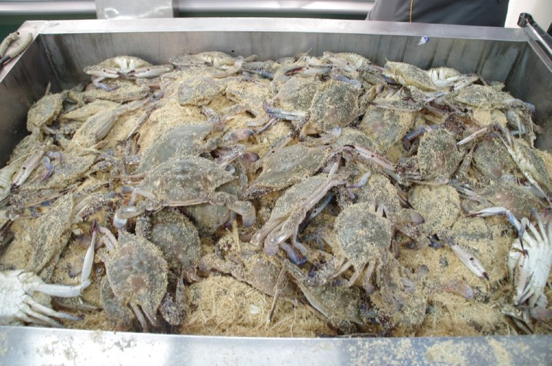 Crabes au supermarché de Jeju City
