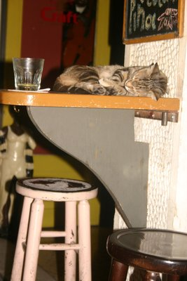 A cat in the bar