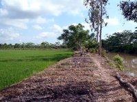 Mekong_a.jpg