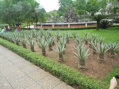 Landscaping at Ho Chi Minh museum