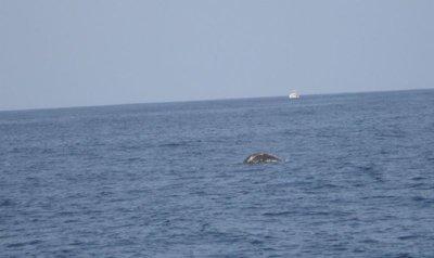 whale_back.jpg
