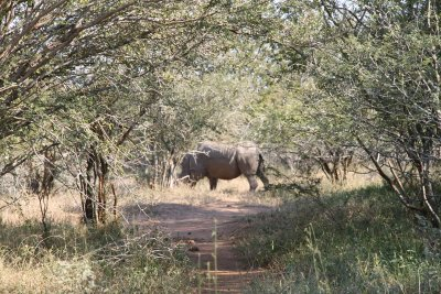The rhino that completed our big 5 sightings