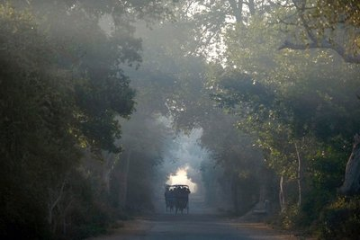 Keoladeo Wildlife Sanctuary, Bharatpur, Rajasthan