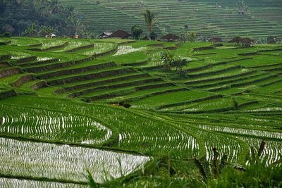 05_Jatiluw..fields_0894.jpg