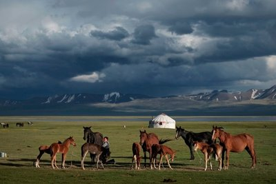 Milking horses, Lake Song Kul
