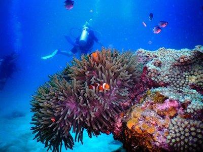 Diving, Perhentian Islands