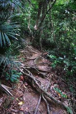 Jungle walk, Perhentian Besar