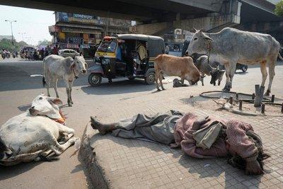 Street scene, Kota, Rajasthan