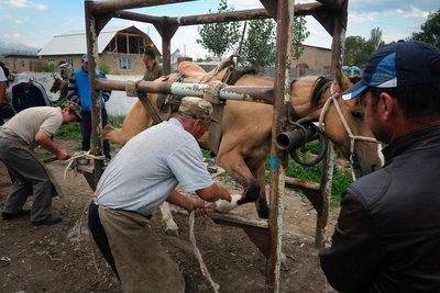 Shoeing horses, Karakol Livestock Market