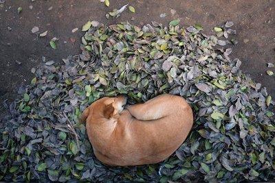 Dog, Gwalior, Madyha Pradesh