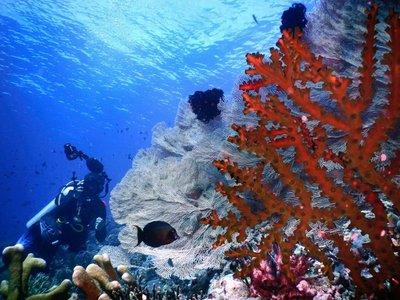 Diving, Togian islands