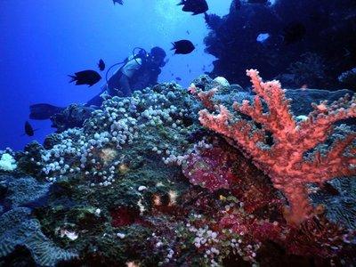 Diving, Bunaken island