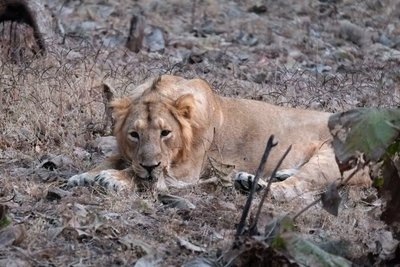 Sasan Gir Wildlife Sanctuary